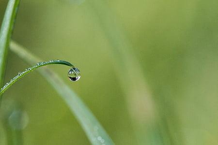 tippuminen, Dew, Dewdrop, pisara vettä, Morgentau, vesi, ruoho