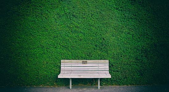 Lavička, živý plot, zelená, hnědá, pozadí, dřevo - materiál, Příroda