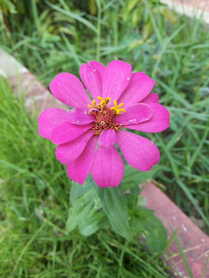 flores, naturaleza, bonita