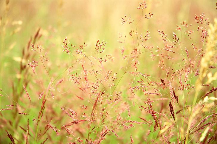 Prada, pastures, herba, natura, camp, Prat, natural