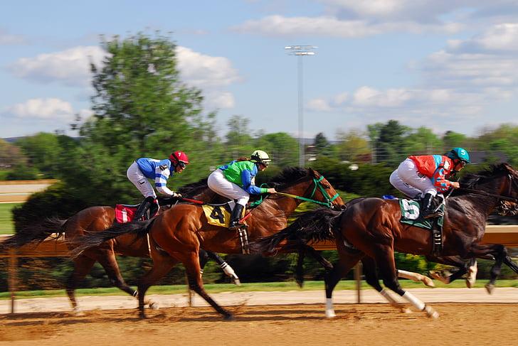 curses de cavalls, cursa, dels cavalls de cursa, poder, velocitat, Hípica, carreres