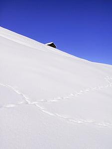 winter, snow, ice, cold, wintry, white, tree
