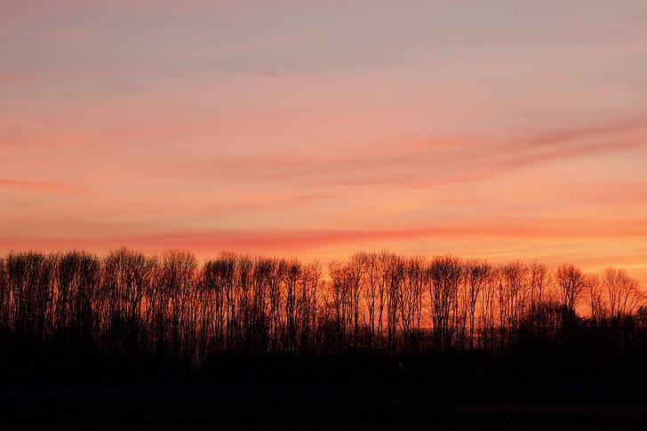 βράδυ κόκκινο, το βράδυ, ηλιοβασίλεμα, βραδινό ουρανό, πολύχρωμο ηλιοβασίλεμα, Δύση του ήλιου, δέντρα