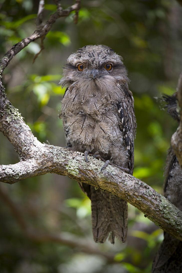 Австралия, птица, природата, животните дивата природа, едно животно, животни в дивата природа, животните