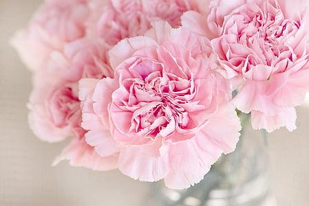 цветя, розово, Карамфил, рязани цветя, затвори, розов цвят, цвете