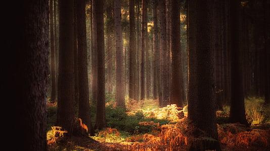ป่า, นิทาน, ฝัน, เทพปกรณัม, ลึกลับ, แสงแดด, ต้นไม้