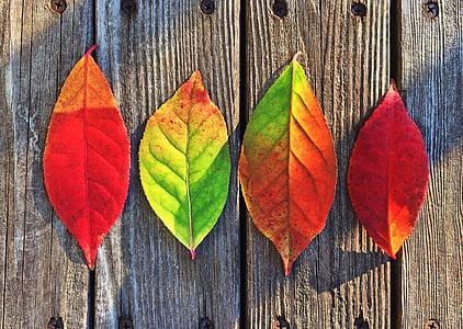 feuilles, l'automne, couleurs, arc en ciel, feuille, automne, changer
