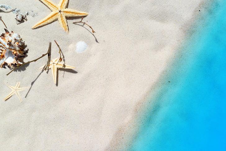 plajă, vacanta, mare, vara, midii, relaxare, nisip