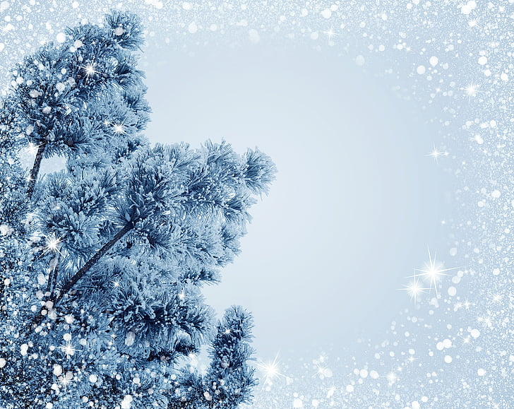 snow, christmas, holiday, frost, christmas tree, background, shiny