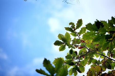 tardor, les fulles, el paisatge, Xina, fulla verda, Burl, l'estiu