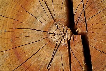 fusta, soca, fusta, amb textura, panell, vell, rústic