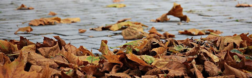 το φθινόπωρο, φύλλα, Χρυσή φθινόπωρο, φύλλα το φθινόπωρο, φύλλωμα πτώσης, φύλλο, φύση