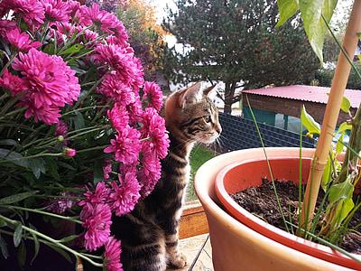 little kitten, flowers, summer, curiosity, domestic Cat, pets, animal