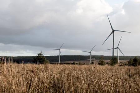 energia, erba lunga, turbine, Vento, Parco eolico, Mulini a vento, conservazione ambientale