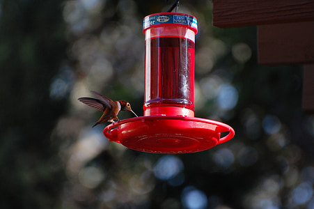 hummingbird, nectar, nature, wing, hover, wildlife, small