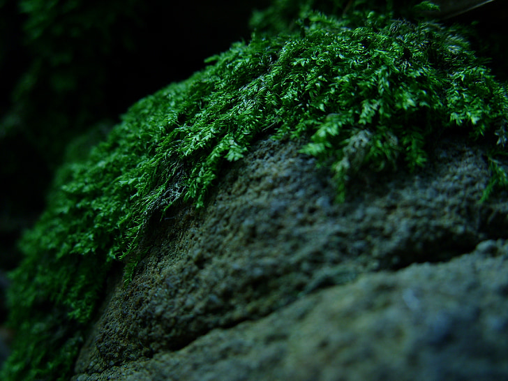 forest, moss, forest litter, macro, the stones