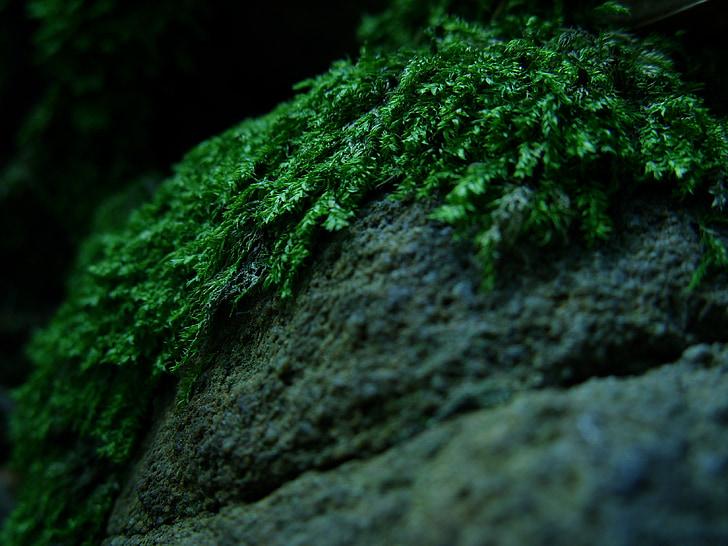 meža, sūna, mežā atkritumiem, makro, akmeņi