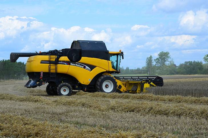 recol·lectora, collita de cereals, Segadora, màquina agrícola, l'agricultura, l'estiu, la collita