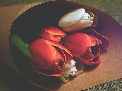vermell, Roses, flors, blanc