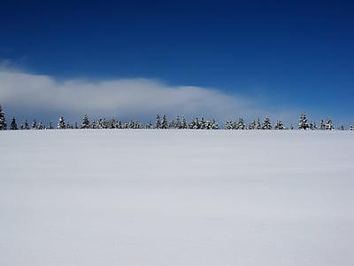 winter, snow, plain, winter landscape, nature, fir, landscape
