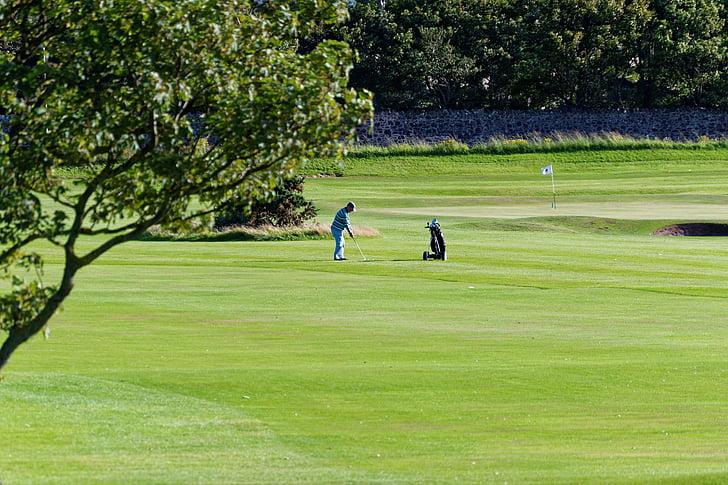 golf, golf course, golfer, green, course, grass, sport