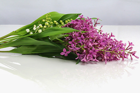 thrush, lilac, flower, bell, spring, 1 ° may, lily of the valley