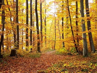 Orman, Sonbahar, ağaçlar, doğa, uzakta, ağaç, yaprak