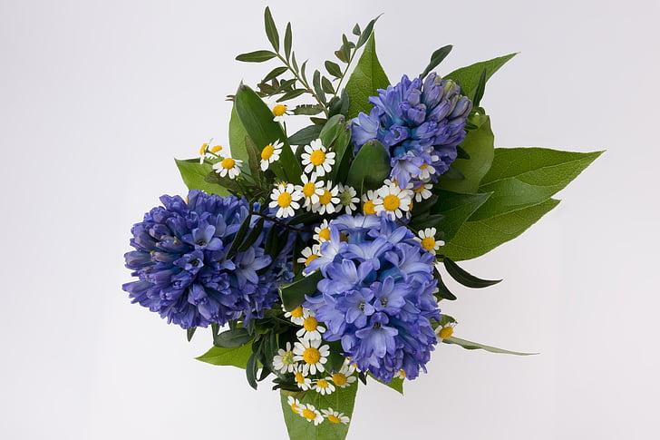 RAM, Jacint, Hyacinthus orientalis, jacintàcies, planta d'espàrrecs, flor, primavera