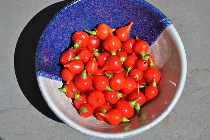 辣椒, 植物, 自然, 红色, 香辣, 调味, 食品