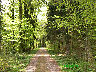 forest, road, green