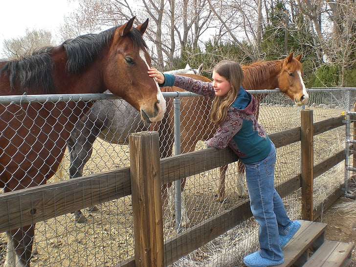 horse, girl, friends