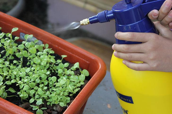 öntözés, spray, Kertészet, növény