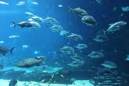 Aquari, Parc de l'oceà, peix