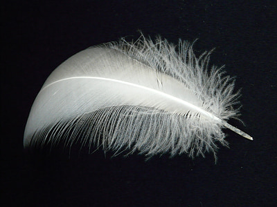 swan feather, spring, swan, slightly, airy, fly, filigree