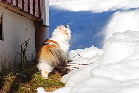mačka, mačka u snijegu, bijela mačka, u bijegu, zima mačka