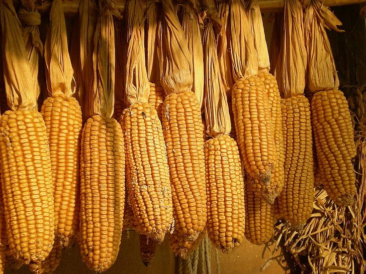 Korėjos Respublika, Liaudies, kukurūzų, derliaus, sausas, maisto, žemės ūkis