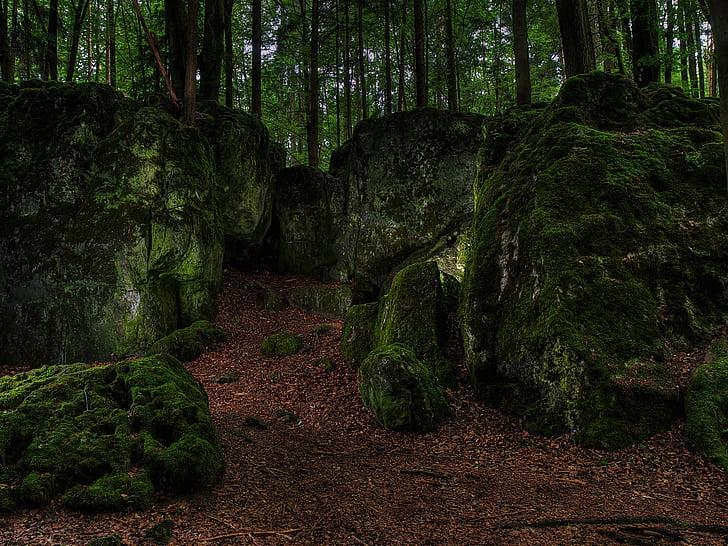 Moss, skog, grønn, bemoost, vann running, natur, Wild