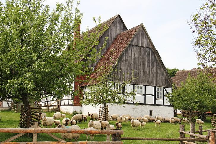 Farm, lampaat, lammaslauma, karitsat, eläimet, kevään, Luonto