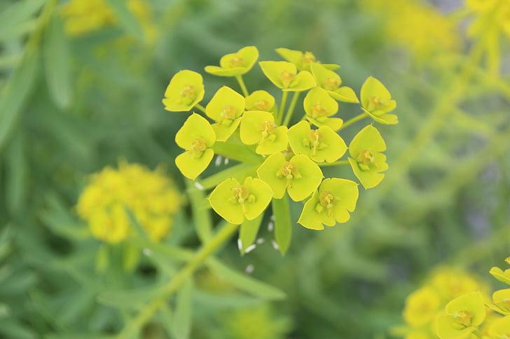 желтый, Блоссом, Блум, Желтые цветы, желтый цветок, цветок, завод