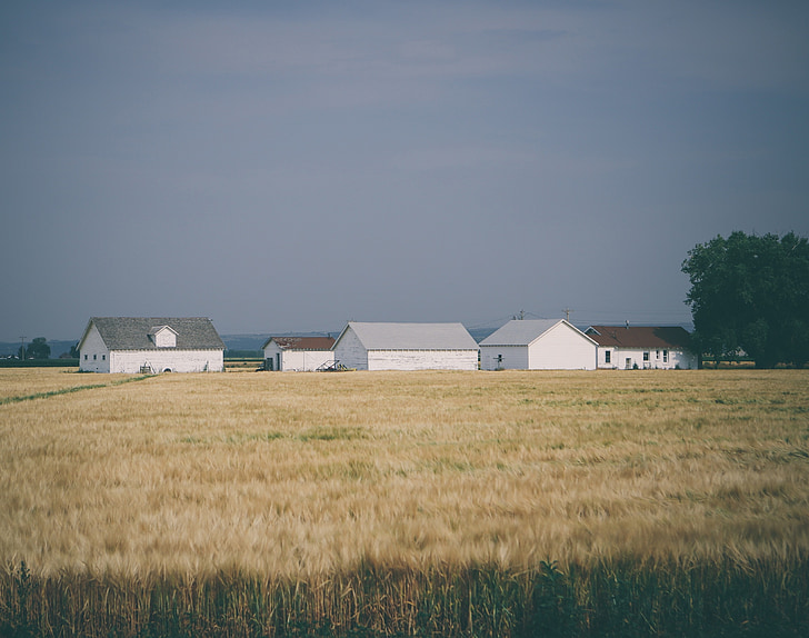 farm, crops, fields, agriculture, rural, country, rural Scene