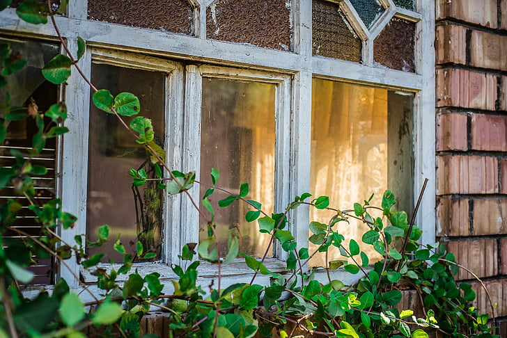 architecture, house, window, shield, green, plants, outside
