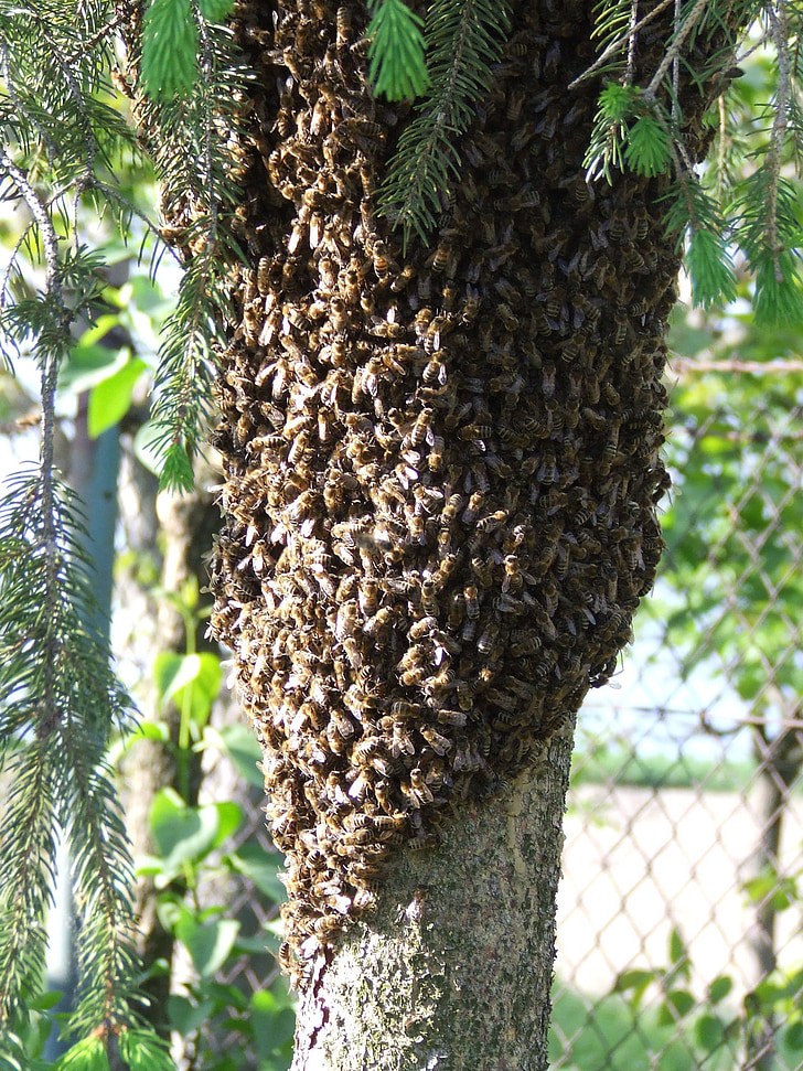 bees, insects, swarm