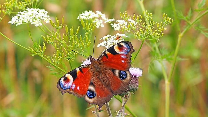 Insekt, Natur, Leben, ein Tier, Tierthema, Tiere in freier Wildbahn, Anlage