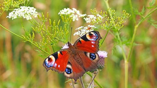 côn trùng, Thiên nhiên, sống, một trong những động vật, chủ đề động vật, động vật hoang dã, thực vật