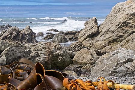 Kaikoura, Kaikoura kusten, Sydön, Nya Zeeland, havet, Ocean, kelp