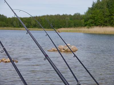 fish, fishing rods, boat, water, lagoon, lake, angler