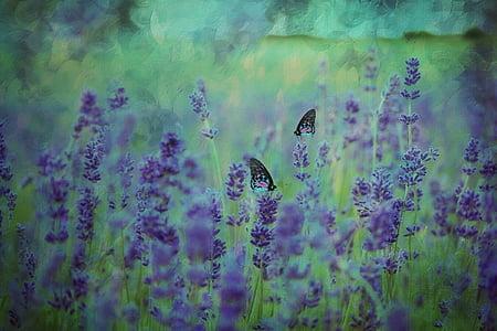 textúra, háttér, levendula, levendula mező, levendula virág, lila, nyári