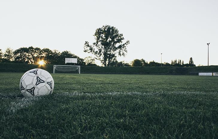 blanc, futbol, pilota, verd, gramínies, encara, elements