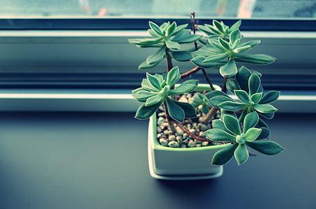 planta, jardí, flor, verd, Oficina, decoració, Test
