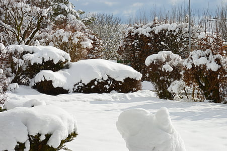 winter, snow, winter bushes, winter dream, wintry